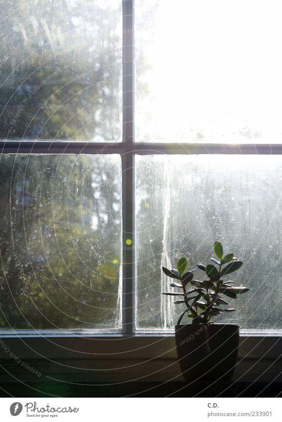 Plant Leaf Calm Window Dirty Window pane Flowerpot Window board View from a window Pot plant Sunbeam Window transom and mullion