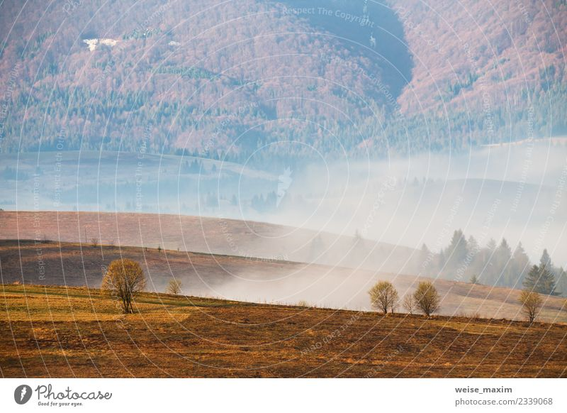Morning fog in the valley. Spring misty hills scene Nature Vacation & Travel Landscape White Tree Clouds Far-off places Forest Mountain Autumn Natural Meadow