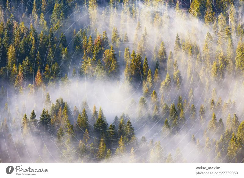 coniferous forests covering with a lot of fog Nature Vacation & Travel Plant Summer Green Landscape White Tree Clouds Forest Mountain Spring Natural Copy Space