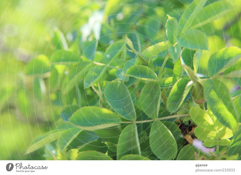 Nature Green Plant Summer Leaf Yellow Spring Natural Beautiful weather Wild plant Perspective Climate