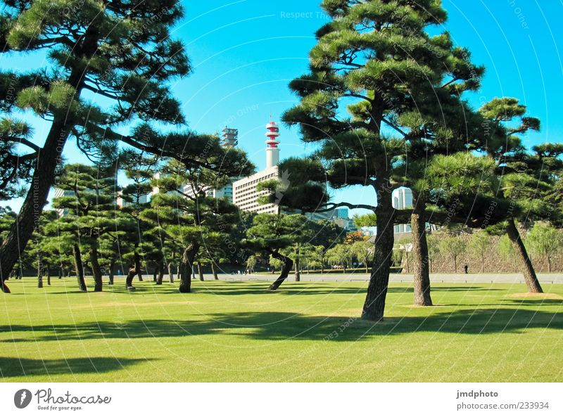 Garden in Japan Environment Plant Summer Beautiful weather Tree Park Tokyo Asia Relaxation Vacation & Travel Growth Blue Green Elegant Nature Tourism
