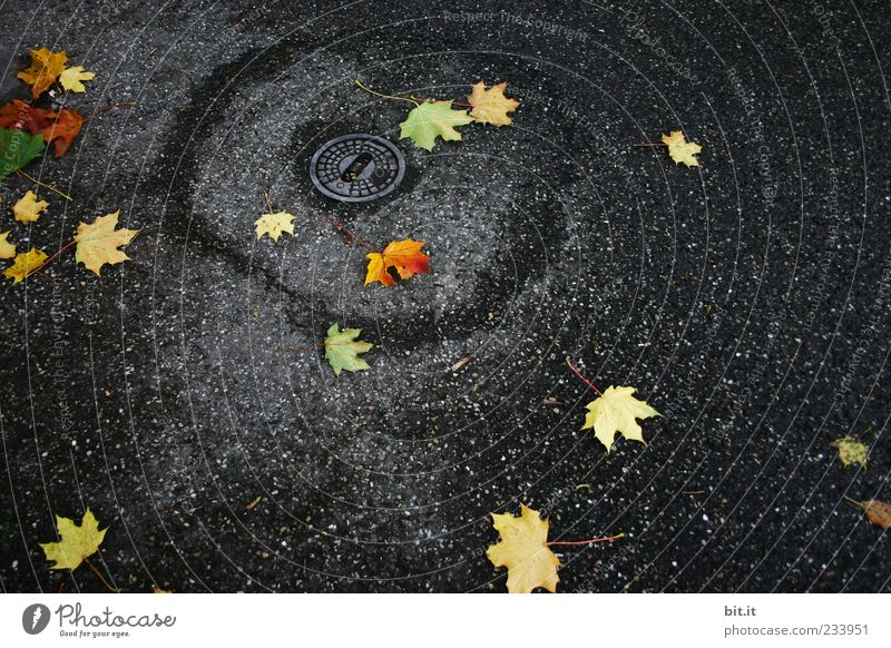 Leaf Black Yellow Autumn Rain Weather Wet Gold Circle Places Gloomy Lie Climate Asphalt Damp Gully