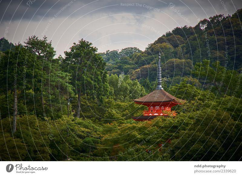 Kiyomizu-dera Exotic Harmonious Senses Meditation Far-off places Freedom Temple World heritage Nature Plant Animal Forest Kyoto Japan Asia Town