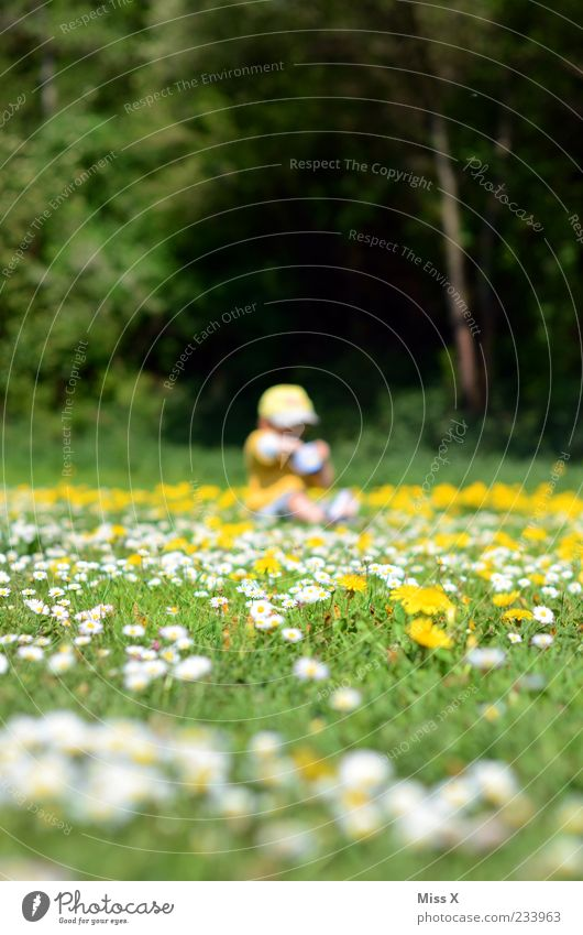 flower meadow Playing Human being Child Toddler Infancy 1 1 - 3 years Environment Nature Beautiful weather Tree Flower Grass Blossom Park Meadow Sit Small Daisy