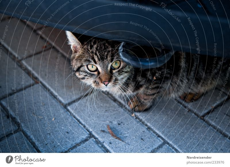 300 ...I didn't do it. Means of transport Car Animal Pet Cat 1 Observe Curiosity Watchfulness Fear Colour photo Exterior shot Deserted Copy Space bottom Looking