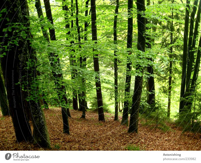 Nature Green Tree Plant Summer Leaf Black Calm Forest Environment Landscape Spring Brown Weather Natural Beautiful weather
