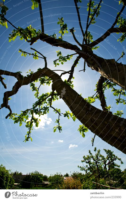 Sky Nature Tree Plant Sun Environment Emotions Garden Spring Beautiful weather Tree trunk Blue sky Branchage Apple tree Twigs and branches Fruit trees