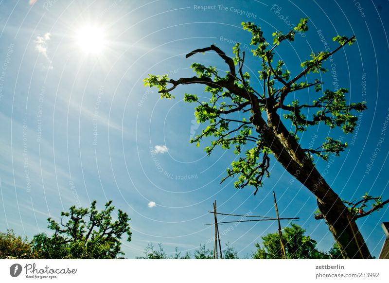 Sky Nature Tree Plant Sun Clouds Environment Life Garden Weather Climate Beautiful weather Climate change Blue sky Garden plot Twigs and branches