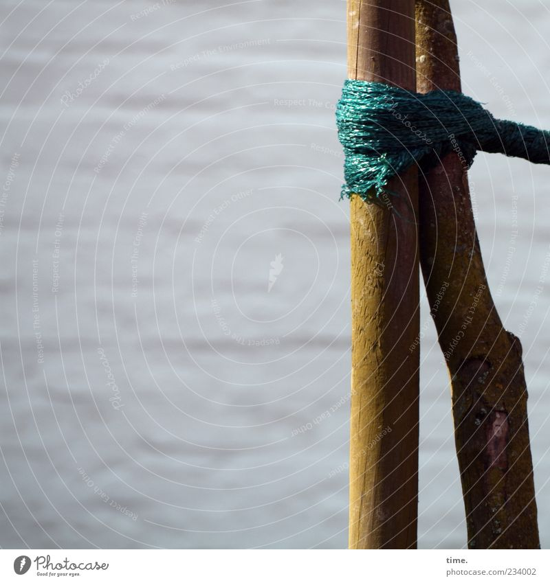 Green Tree Wood Together Rope String To hold on Protection Firm Attachment Tree trunk Relationship Hold Knot Sustainability Connectedness