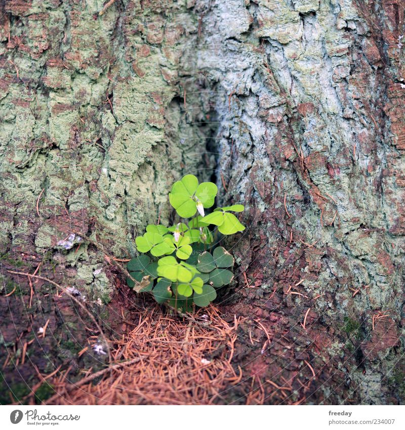 Happiness lurks in every corner Environment Nature Spring Summer Plant Tree Leaf Growth Happy Green Contentment Joie de vivre (Vitality) Spring fever Power