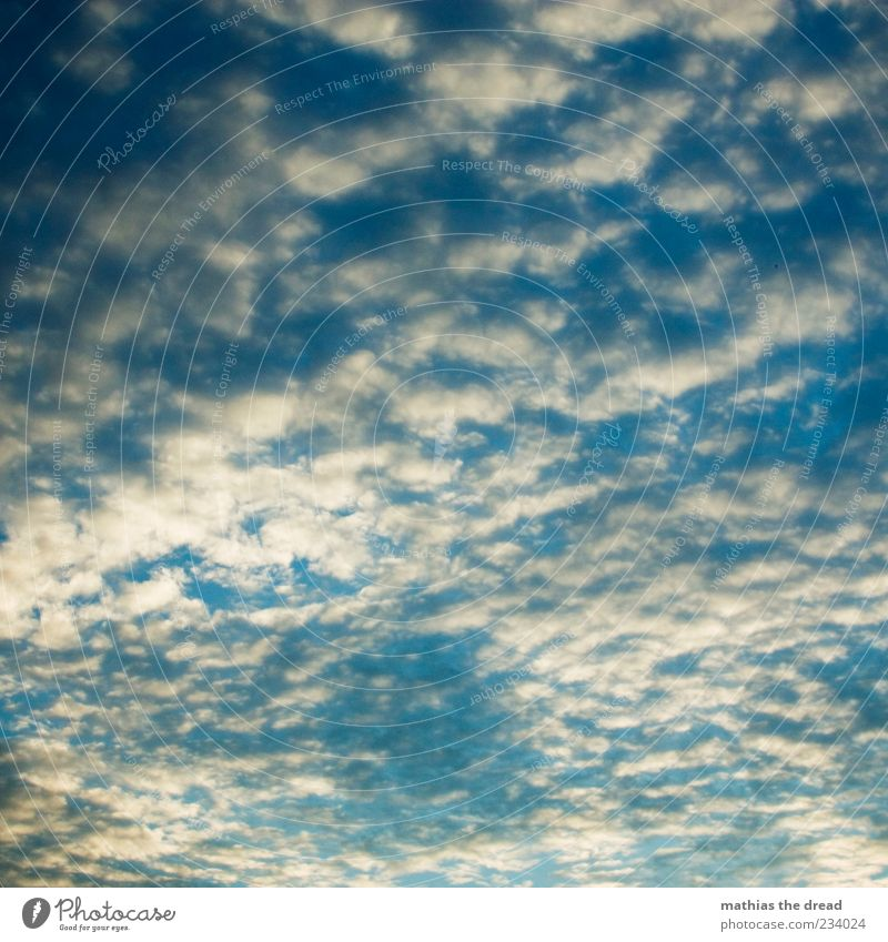 Sky Nature Blue White Beautiful Clouds Calm Environment Idyll Infinity Beautiful weather Hover Clouds in the sky Shadow Multicoloured Sky only