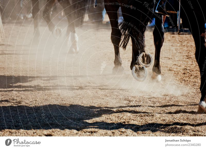 Horses at gallop Animal 3 Group of animals Herd Esthetic Ride Equestrian sports Horseracing Horse's gait Horse-drawn carriage Horseshoe Hoof Sand Racing sports