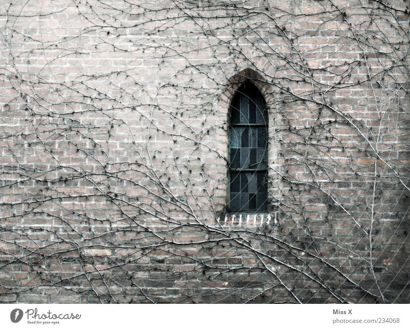 Old Plant Window Autumn Cold Wall (building) Religion and faith Wall (barrier) Building Church Growth Change Gloomy Grief End Manmade structures