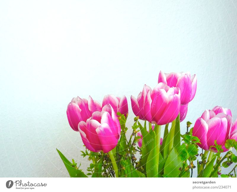 White Green Beautiful Plant Flower Colour Wall (building) Blossom Spring Pink Fresh Decoration Transience Kitsch Blossoming Stalk