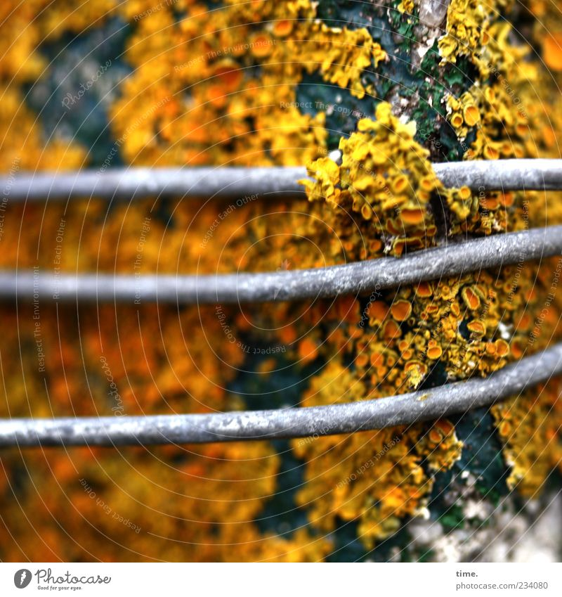 Green Plant Yellow Environment Wood Gray Metal Orange Climate Change Metalware Transience Tree trunk Wire Nature Blur