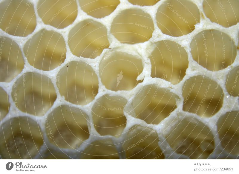 Honeybee's home. Nature Honeycomb Honeycomb pattern Yellow White Detail Pattern Structures and shapes Deserted Close-up Round