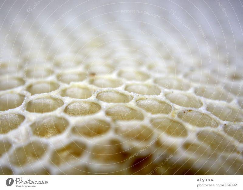 Honeycomb. Nature Honeycomb pattern Yellow White Close-up Blur Deserted Detail
