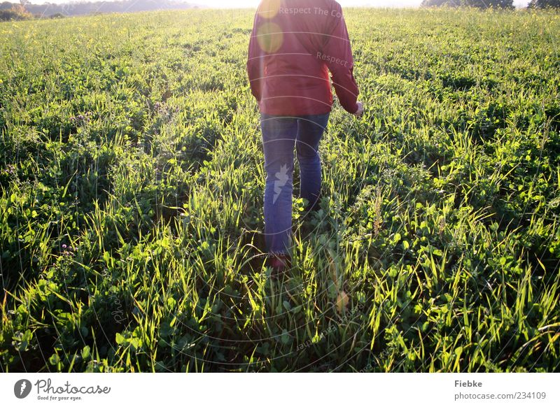 Human being Nature Loneliness Meadow Landscape Freedom Movement Grass Bright Going Field Walking Jeans Beautiful weather Jacket Headless