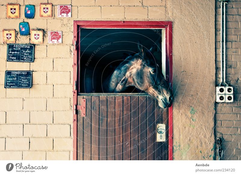 stable Style Leisure and hobbies Ride Deserted Wall (barrier) Wall (building) Animal Horse 1 Looking Wait Glittering Door Stable Signs and labeling