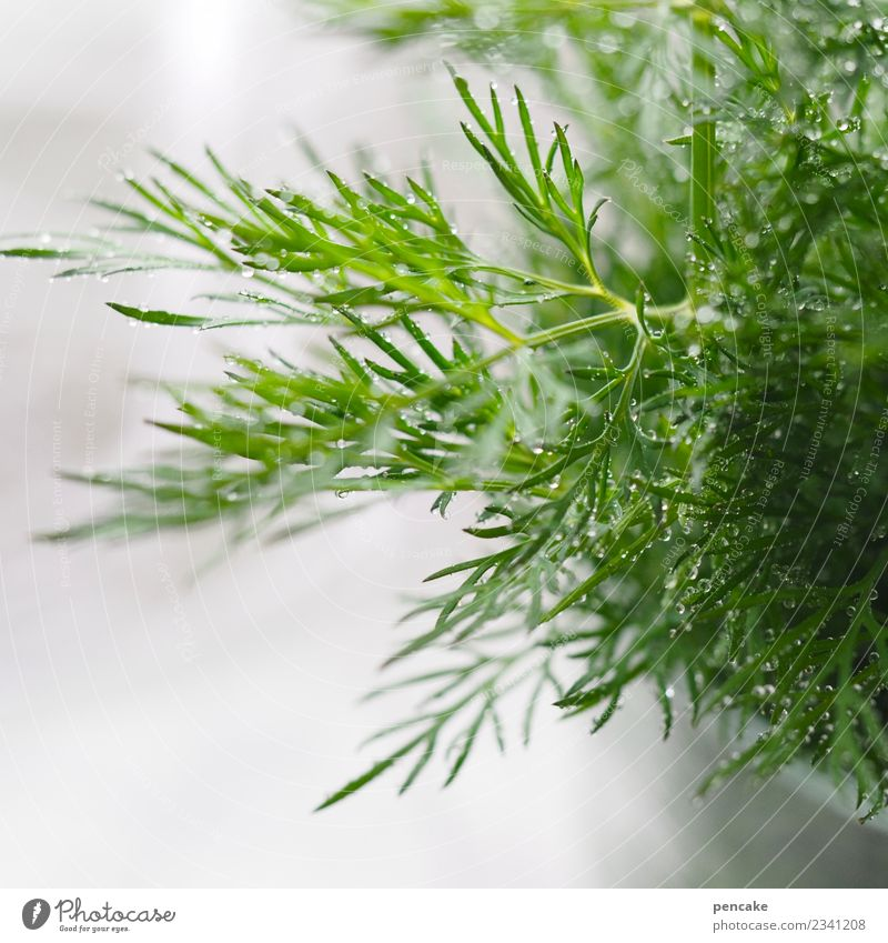 Dill to fish food Food Herbs and spices Nutrition Authentic Fragrance Fresh Healthy Delicious Fish dish Green Drops of water Colour photo Interior shot Close-up