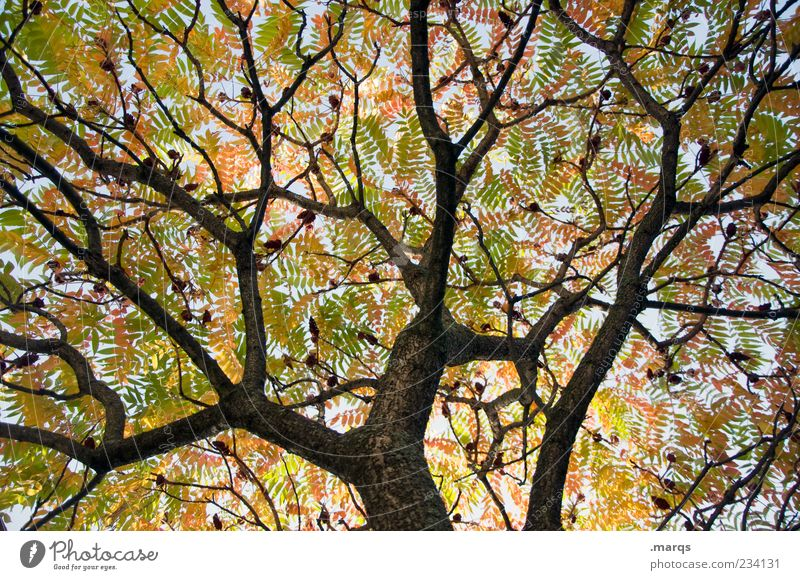 branches Nature Autumn Tree Branch Leaf Leaf canopy Faded Multicoloured Network Chaos Sky Limp Colour photo Exterior shot Deserted Worm's-eye view Branchage