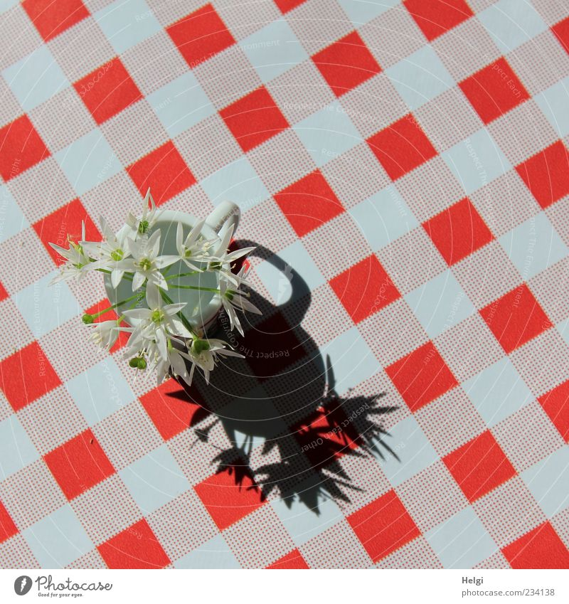 White Beautiful Red Plant Flower Black Blossom Design Fresh Esthetic Table Perspective Decoration Uniqueness Simple Plastic