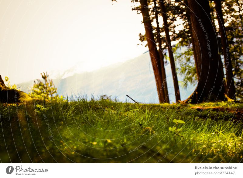 the perfect place for a picnic Senses Relaxation Calm Fragrance Summer Mountain Environment Nature Landscape Plant Horizon Spring Beautiful weather Tree Grass