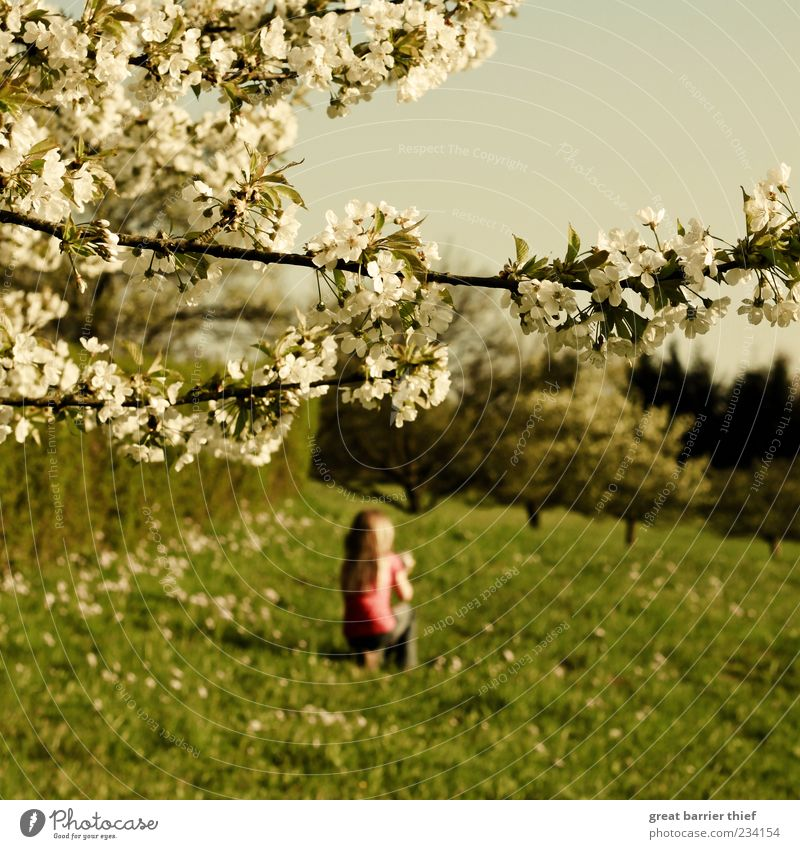 spring girl blossoms meadow trees Child Girl 1 Human being 3 - 8 years Infancy Nature Landscape Plant Spring Beautiful weather Tree Blossom Relaxation