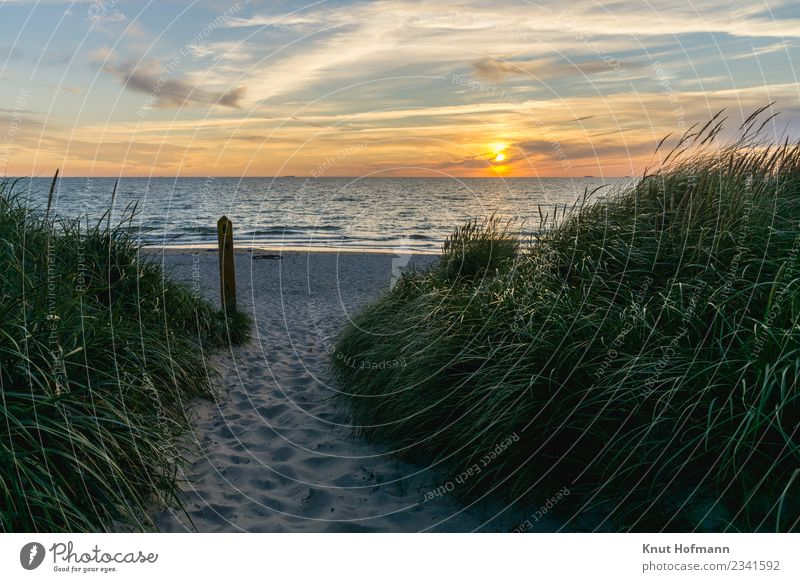 Sunset at the beach Relaxation Calm Meditation Trip Camping Summer Beach Ocean Landscape Sand Water Horizon Sunrise Beautiful weather Grass Coast