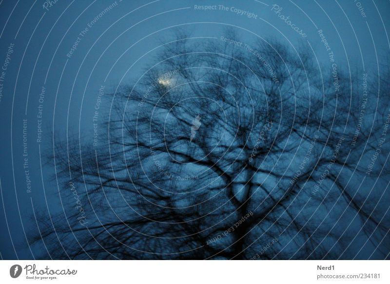 Sky Blue Tree Plant Winter Loneliness Black Moon Treetop Branchage Moonlight Leafless
