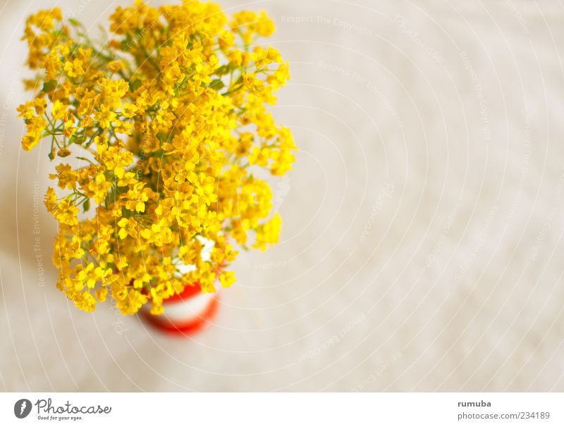 Nature Beautiful Plant Joy Yellow Blossom Spring Happiness Decoration Illuminate Cute Blossoming Bouquet Joie de vivre (Vitality) Vase Sympathy