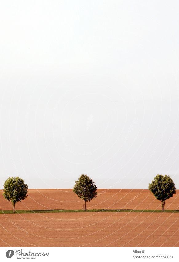 Sky Nature Tree Far-off places Landscape Spring Horizon Brown Field 3 Growth Avenue Plain