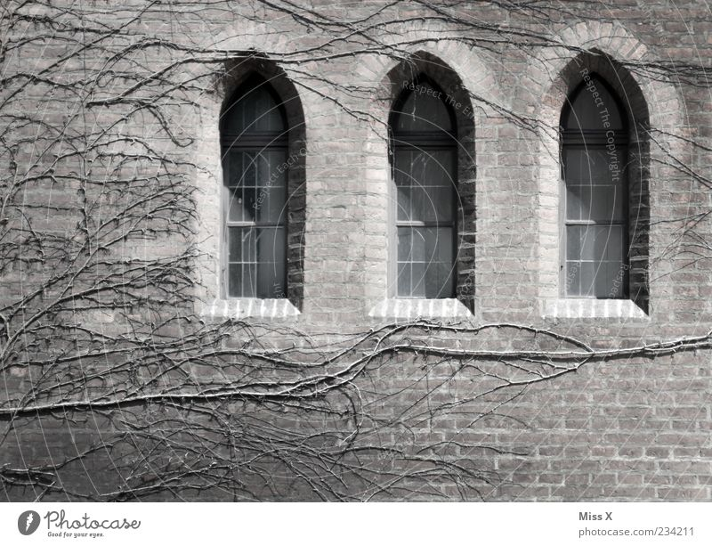3 windows Plant Deserted Church Castle Ruin Wall (barrier) Wall (building) Facade Window Old Dark Apocalyptic sentiment Transience Masonry Building