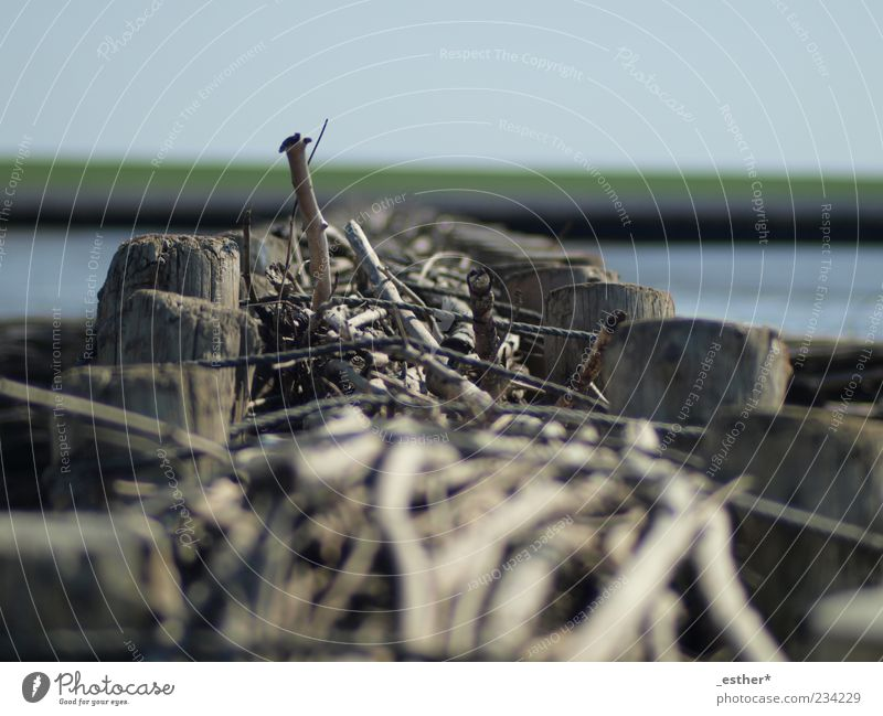 Wood in the sea Water Coast Blue Calm Vacation & Travel Colour photo Exterior shot Deserted Day Light Sunlight Shallow depth of field Worm's-eye view