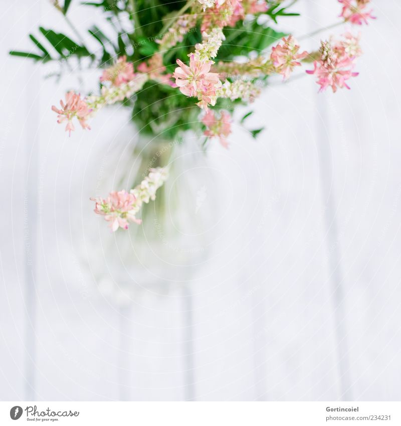 meadow flowers Plant Flower Blossom Bright Beautiful Bouquet Vase Flower vase Decoration Pink Green White Wooden table Fabaceae Onobrychis viciifolia