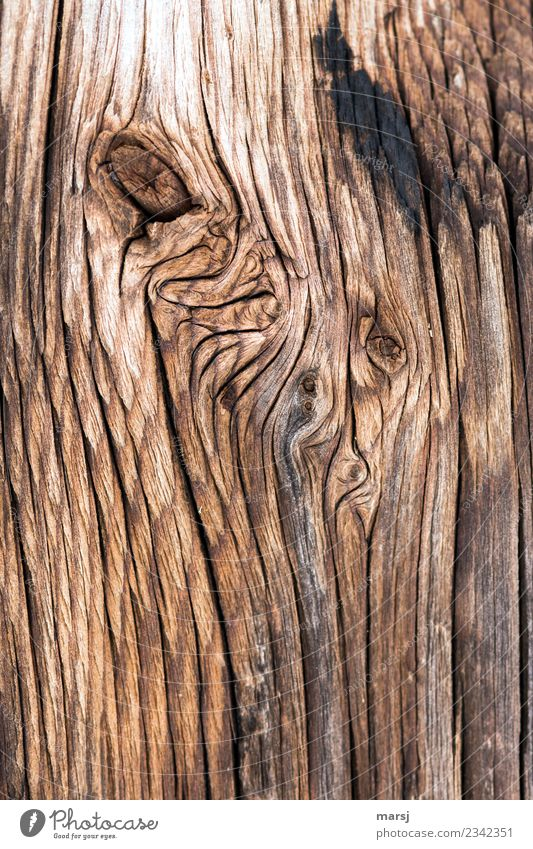 Texture gnarled Wood grain Crack & Rip & Tear Old Authentic Weathered Headstrong Rustic Background picture Colour photo Subdued colour Exterior shot Close-up