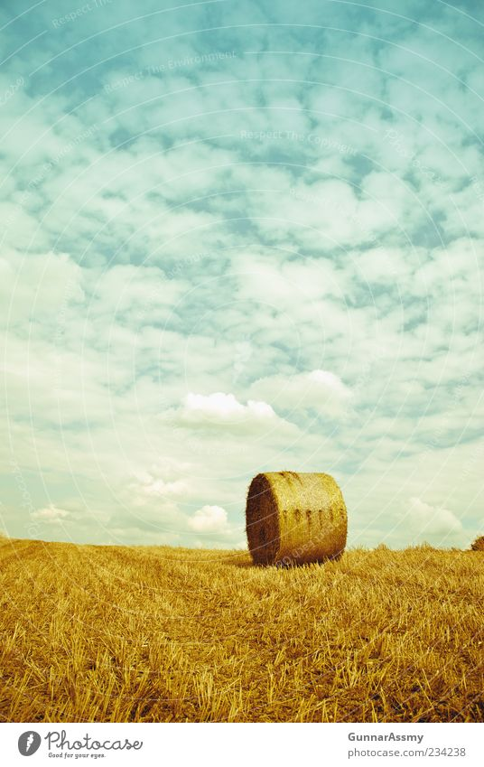 Nature Sky Blue Summer Yellow Field Environment Gold Perspective Natural Beautiful weather Ecological Coil Sustainability Hay Bale of straw