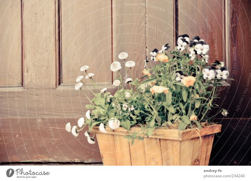 Green Plant Flower Yellow Wood Blossom Spring Brown Door Growth Stand Decoration Blossoming Fragrance Basket Daisy Family