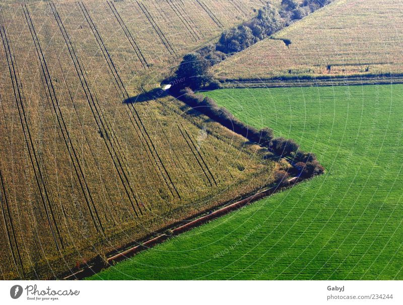 zap, zap Landscape Earth Autumn Maize field Field Sign Arrow Exceptional Natural Brown Yellow Green Change Aerial photograph Deserted Copy Space bottom Day