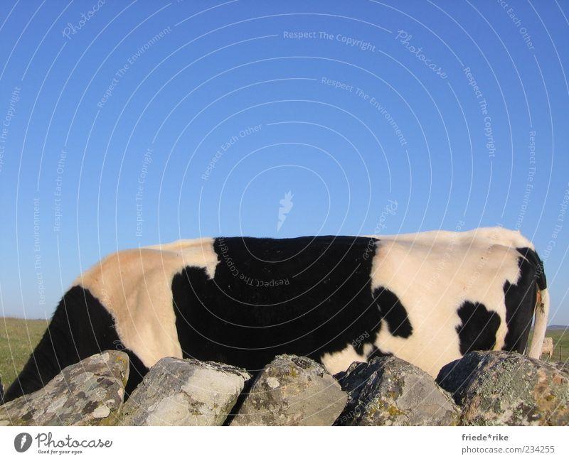 Nature Blue White Green Animal Black Calm Gray Stone Contentment Wild Free Pelt Protection Peace Near