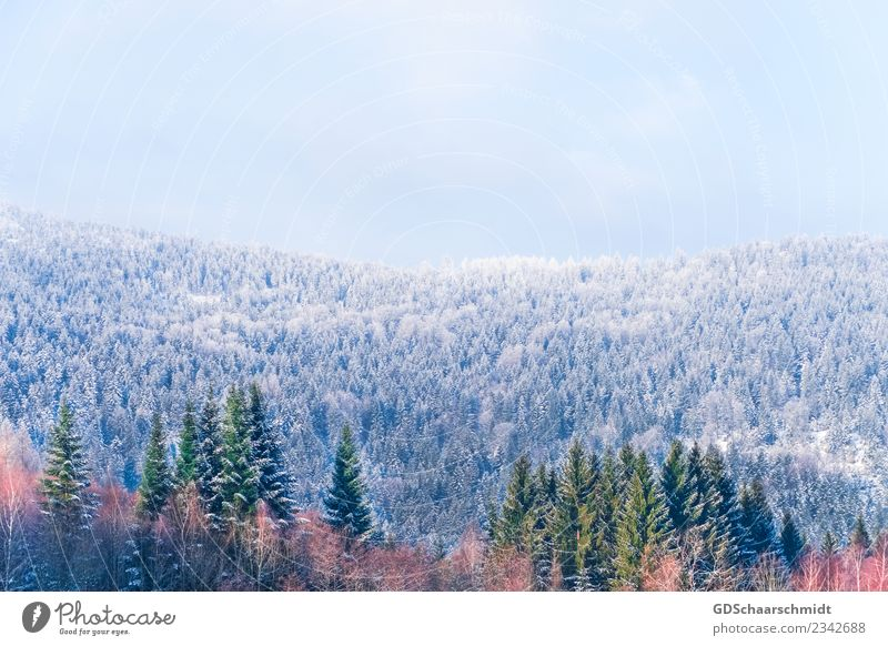 Colours in winter Environment Nature Landscape Plant Sky Winter Beautiful weather Ice Frost Snow Tree Forest Hill Wood Relaxation Natural Blue Gray Green Orange