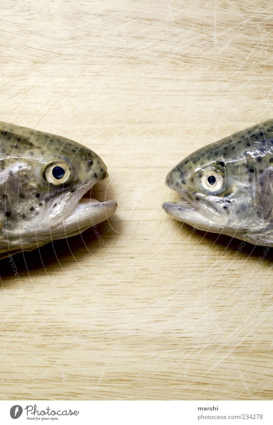 gossips Food Fish Nutrition Trout Looking Animal Wooden board Disgust Muzzle Colour photo Animal portrait Dead animal Rainbow trout Fisheye Smoothness