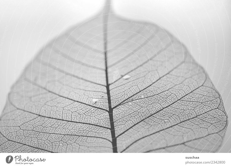 filigree Delicate ramified Branched Fine Thin Structures and shapes Arrangement Leaf Rachis Nature Black & white photo Gray scale value Graphic Close-up