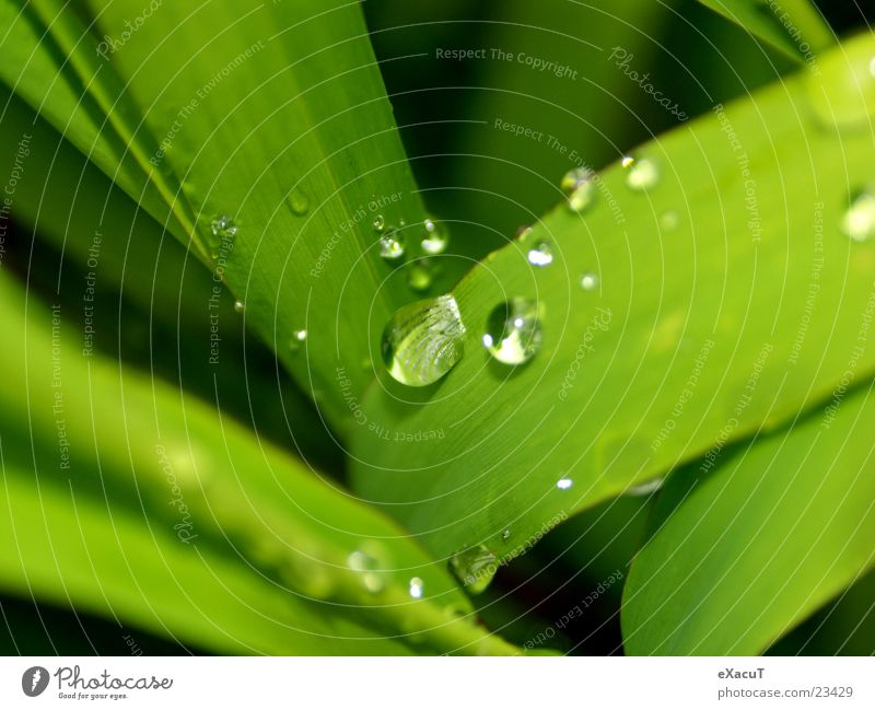 Nature Water Green Plant Leaf Drop Thread