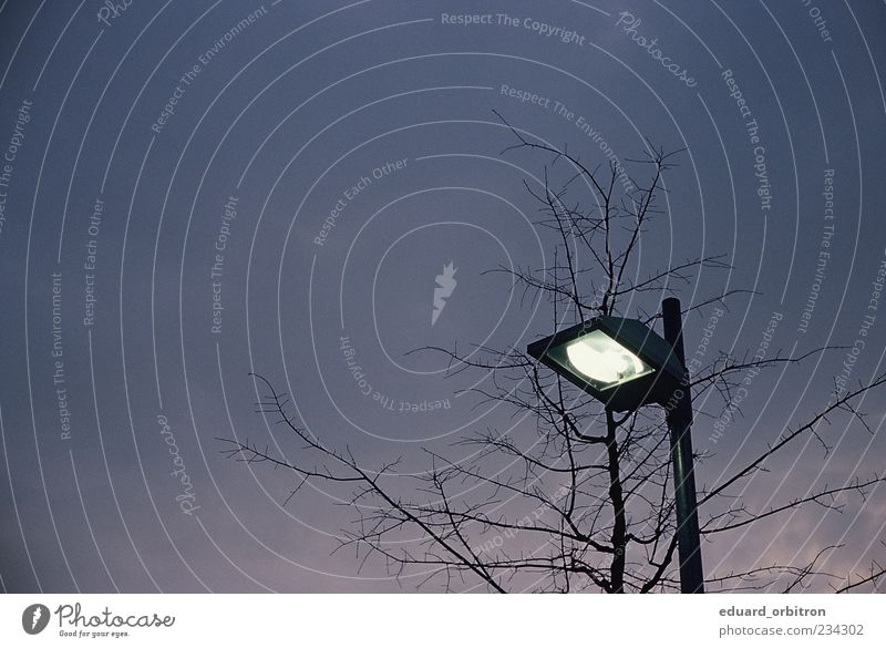 Sky Tree Dark Lamp Illuminate Lantern Street lighting Twigs and branches Clouds in the sky