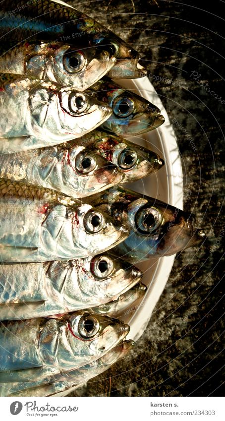 Fishy Fragrance Wet Slimy Silver Equal Colour photo Close-up Animal portrait Reflection Dead animal Many Head Fish eyes Bucket Bird's-eye view Captured