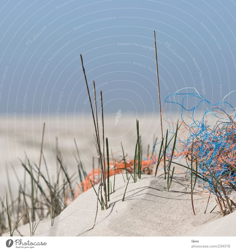 Sky Nature Plant Beach Environment Landscape Coast Sand Horizon String Plastic Trash Beach dune Blade of grass Cloudless sky Blue sky