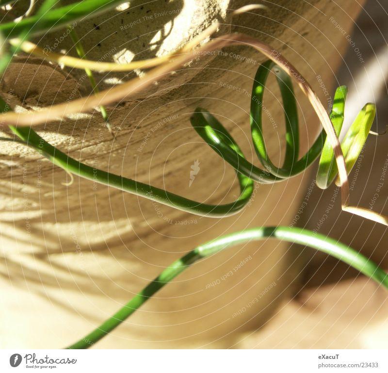 even more grass Plant Grass Pot Green Flowerpot Nature Sun