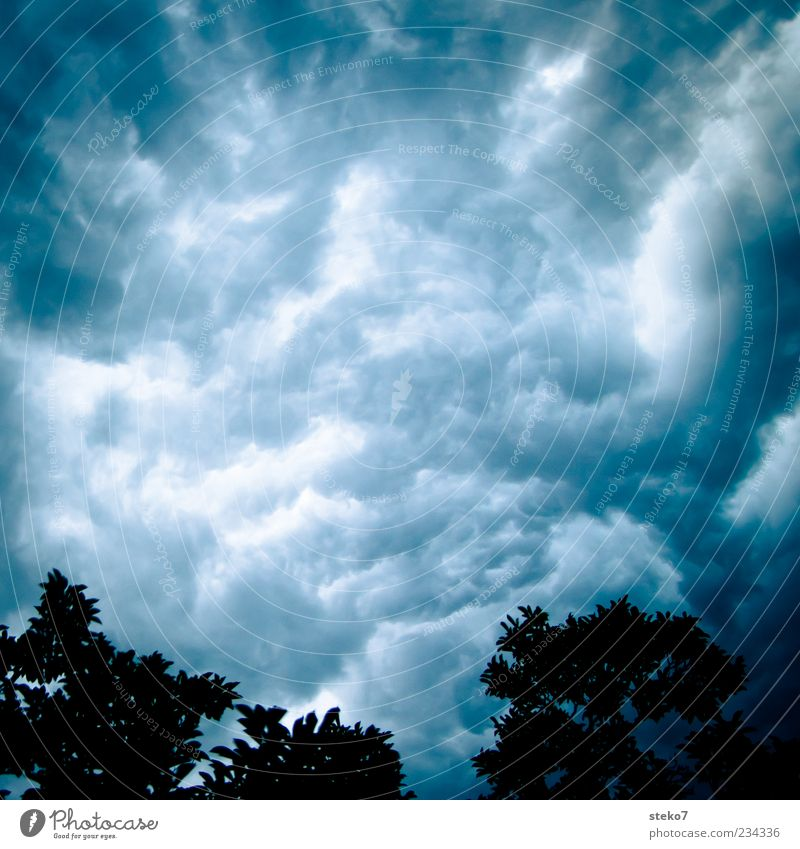 water sky Sky Storm clouds Summer Bad weather Gale Thunder and lightning Tree Threat Blue Gray Fear Disbelief Chaos Change Silhouette Disastrous churned