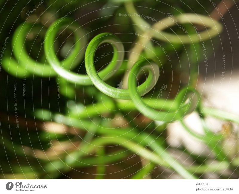 ringworm Grass Green Circle Spiral Plant Near Exceptional Abstract Zoom effect Macro (Extreme close-up) Nature Structures and shapes